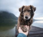Hund som lägger tass i en hand