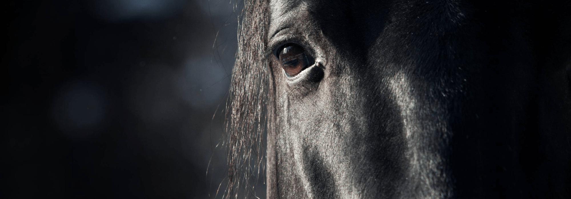 närbild på en svart hästs öga