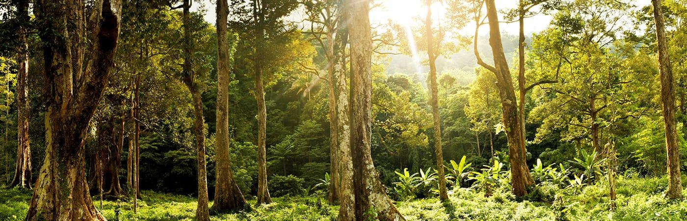 grön skog med solljus