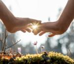 två händer över blomma