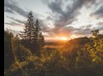 solnedgång med träd i förgrund